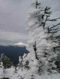 Mt. Jefferson from the summit of Black Butte