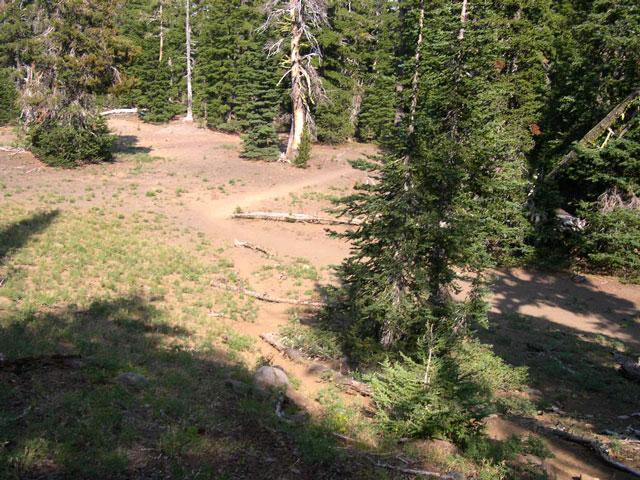 The unmarked climber's trail off the main trail to Chambers Lakes.